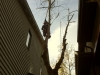 Dead tree removal with highline system