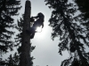 tree-climbing-2