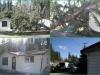 tree-on-house-1